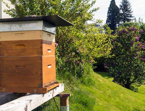 Die Beute, das Haus der Bienen
