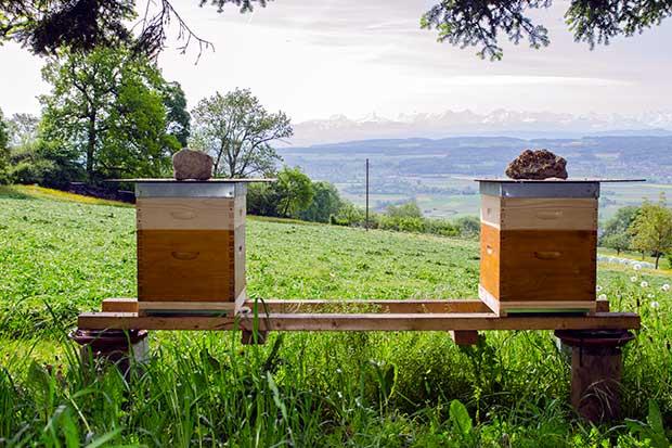 BienenBurgHof1_620