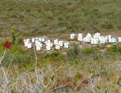 Imkerbesuche in Westaustralien