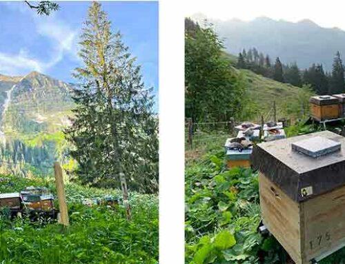 Schweizer Buckfast Belegstellen die wir besuchen